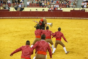 Zlatý hřeb představení přichází – do arény vbíhá osm torcados. První se vrhá býkovi na rohy.