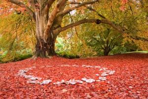 Výrazné vílí kruhy jsou zřetelné hlavně v podzimních dnech.