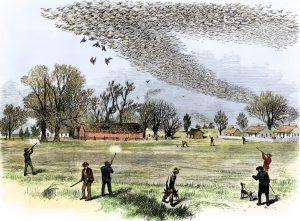 Američtí lovci nemají s holubem stěhovavým žádné slitování.