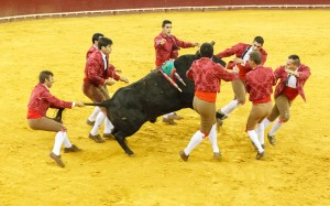 Úkolem je porazit býka na zem, klidně i taháním za ocas.