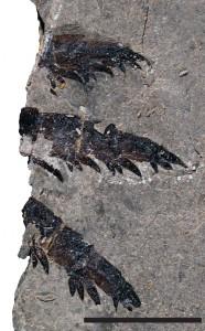 Nalezené fosilie pravěkého tvora jsou 460 milionů let staré.