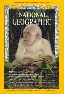 V březnu 1966 se bílý opičák objeví na titulní straně National Geographic a způsobí světovou senzaci.