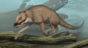 Indohyus raoellidae