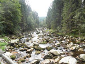 Odhady hovoří o 65 rysech žijících na Šumave