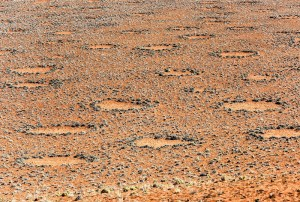 Ani suché oblasti nejsou výjimkou. Tyto vílí kruhy jsou v namibijské poušti.