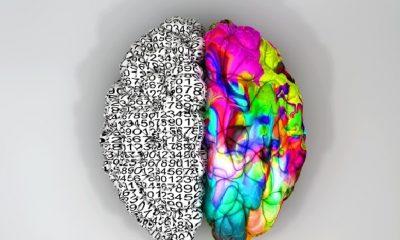 Za leváctví může pravá mozková hemisféra.
