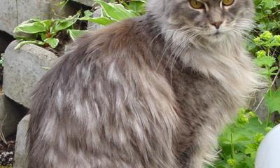 Nejstarší nález ostatků domestikované kočky pochází z Kypru a je starý 9500 let.
