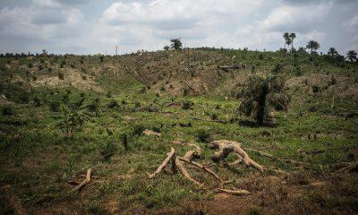Hlavní faktor, který ohrožuje mnoho druhů rostlin je ničení původních stanovišť pro potřeby zemědělství.