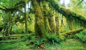 Podle studie zpracované Světovým fondem na ochranu přírody (WWF) se roční míra vymírání pohybuje v rozmezí 0,01 až 0,1 %.