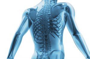 Ačkoliv jsou kosti silnější než ocel, jsou z 30 % tvořeny vodou.