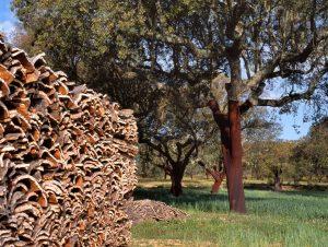 Unikátní vlastnosti borky dubu známe už 484 let.