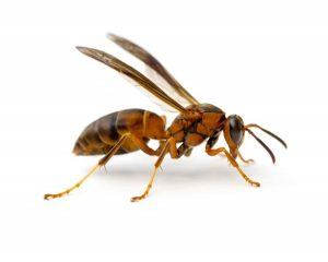 Některé druhy hmyzu ovládají alespoň jednu intelektuální dovednost, vlastní lidem.