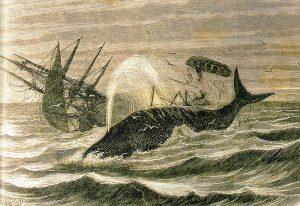 Pouhých 15 minut poté, co neobyčejně přerostlý vorvaň torpédoval Essex, šla loď ke dnu.