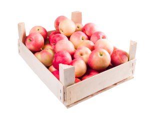 Lísky je třeba před uskladněním jablek dezinfikovat