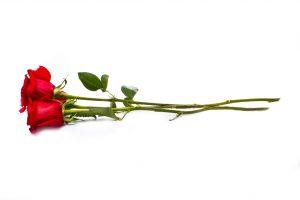 Florista musí zbavit stonky listů