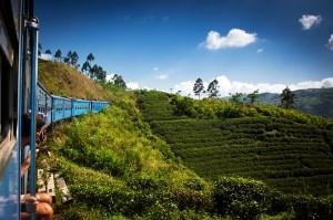 Čajové plantáže jsou všudypřítomné