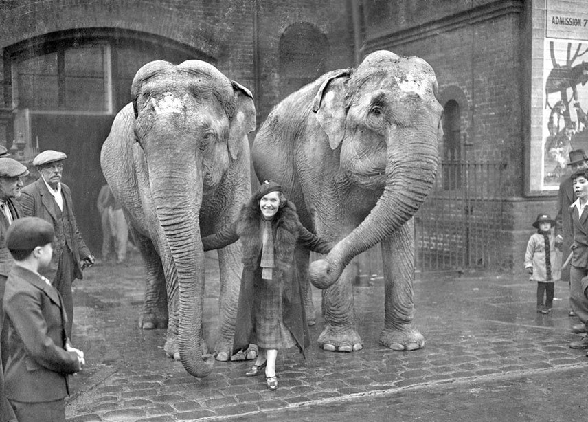 Marie Rasputinová pózuje se slony z cirkusu. Krotit bude ale dravé šelmy.