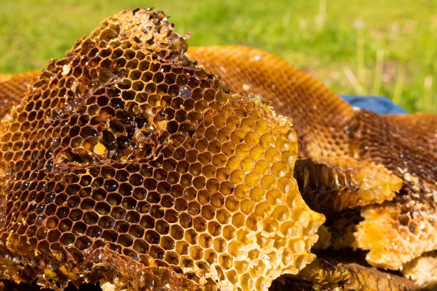 Nejen děti rády vykusují med z pláství.