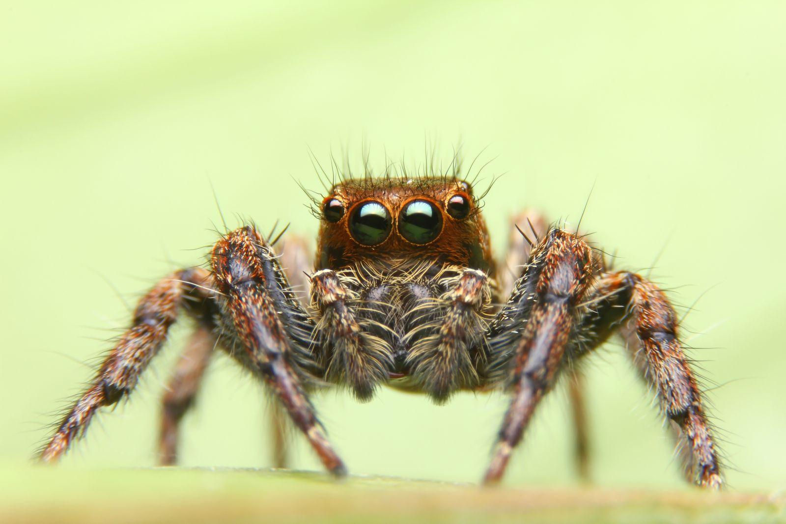 Vědci Využít se snaží také pavoučí jed, který ve většině případů není pro člověka nebezpečný, mohl by však dobře sloužit jako přírodní pesticid.