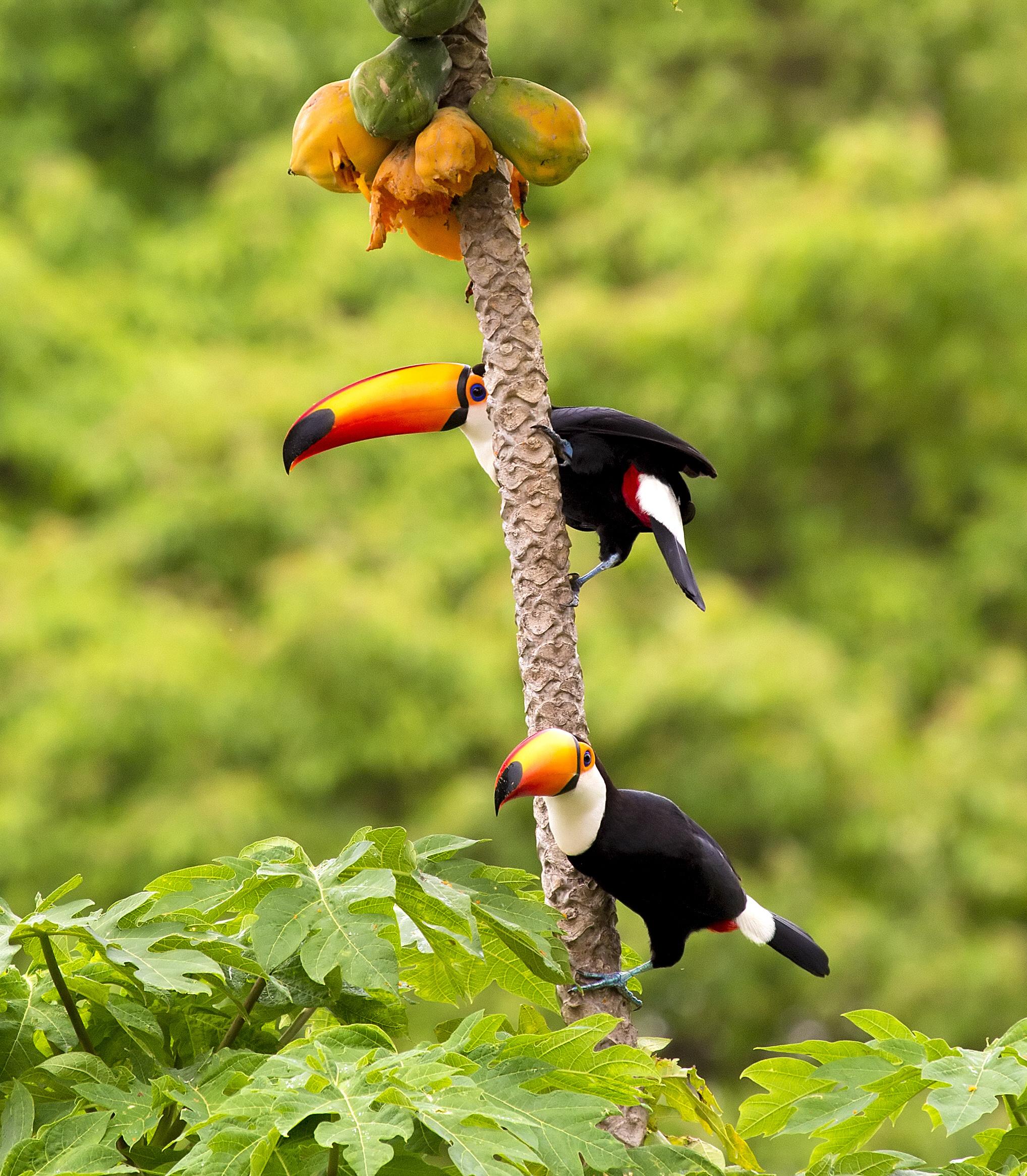 Nejoblíbenější pochutinou je pro ně ovoce, šmakuje jim zejména ovocná šťáva.