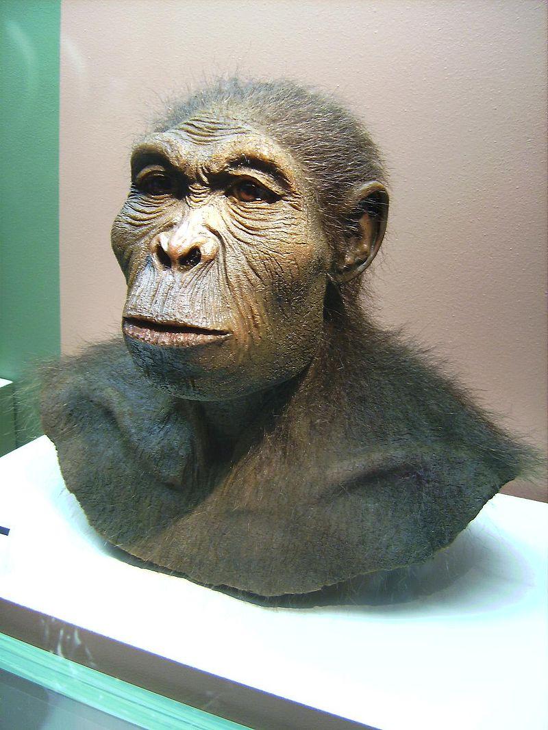 Ve fosilním záznamu je patrný mírný nárůst mozkové kapacity u druhu Homo habilis oproti dřívějším australopitékům. Možná je za to zodpovědný právě oheň.