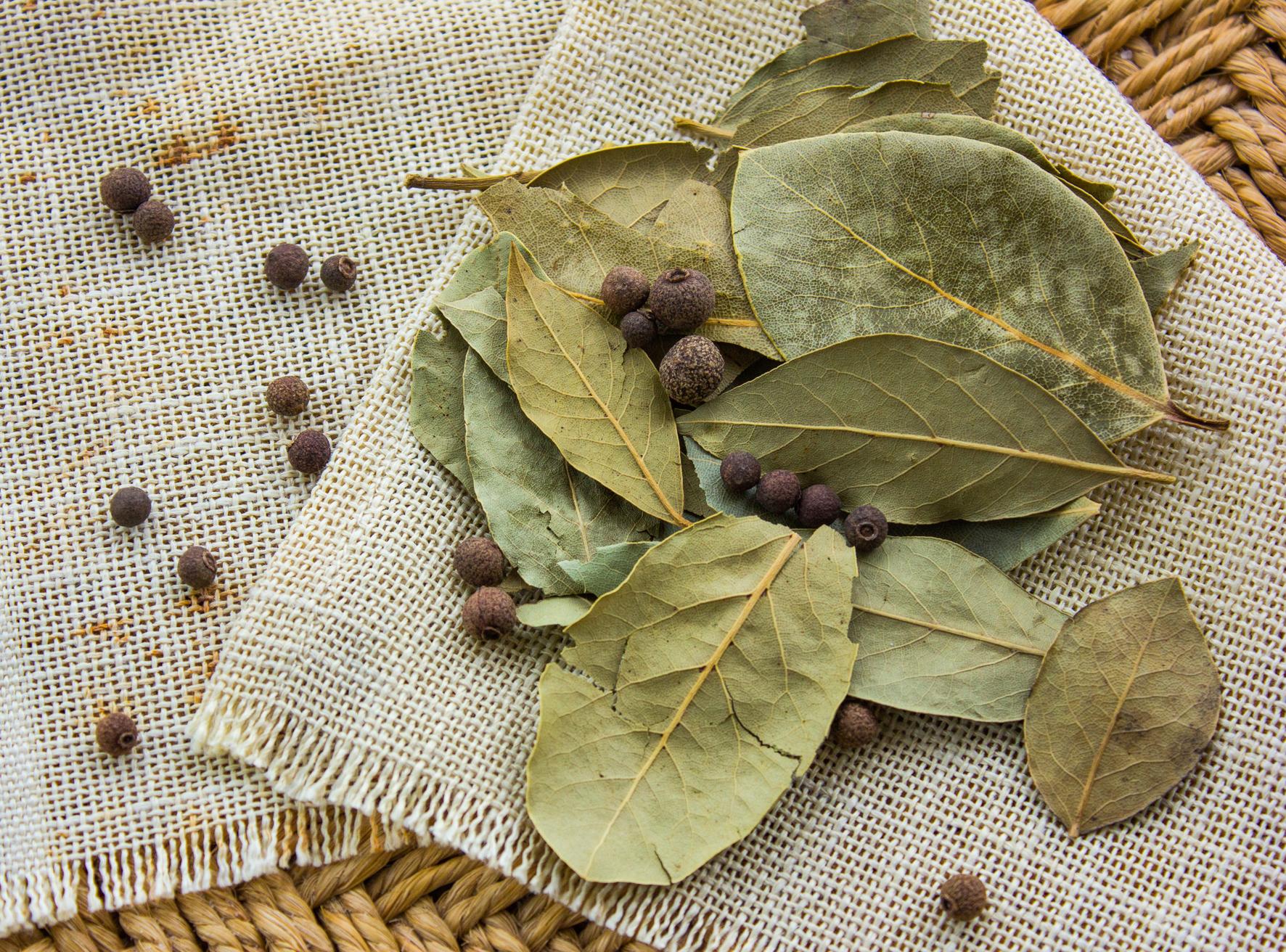Bobkový list bychom neměli doma uchovávat déle než jeden rok a vždy v suchu a temnu.