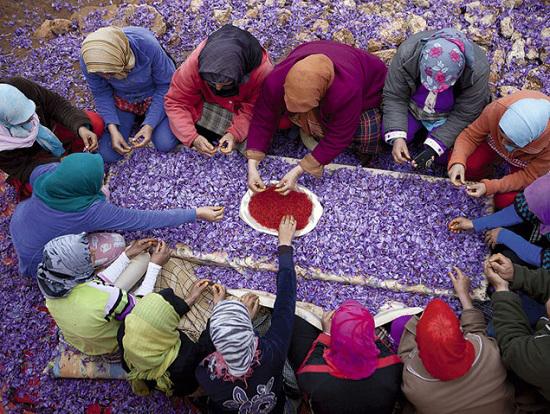 Sběr jeho květů je určen výhradně ženám. Je to totiž velmi jemná práce.