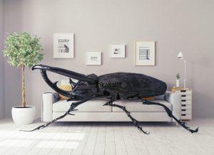 3. Odborníci radí, abychom si na mírumilovné soužití s hmyzem zvykli. Nic se ale nemá přehánět.