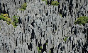 Kamenný les, který vyrostl pod zemí