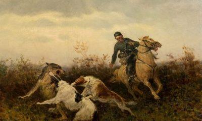 Barzojové vlka buď zadávili, nebo ho podrželi do příchodu lovce.