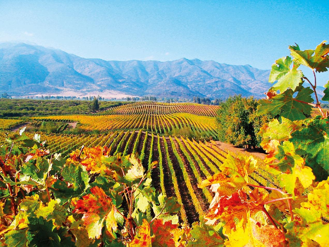 Chilské vinice vás nadchnou svou barevností.