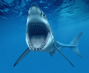 Důkazů o existenci obřího žraloka postupně přibývá.