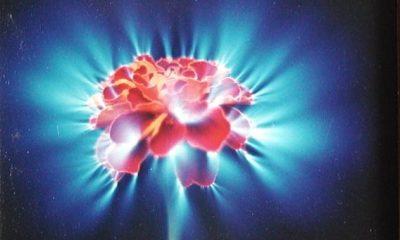 Podle parapsychologů, příznivců alternativní medicíny i okultistů má každý živý organismus svou auru.