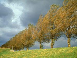 Dvě vědecké studie, publikované v roce 1983 dále prokazují, že vrby, topoly a javory cukrové jsou schopny varovat své okolí.