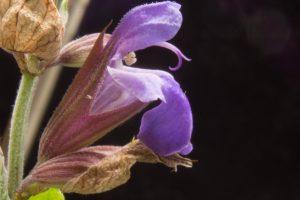 Mimořádné schopnosti řady rostlin jsou odjakživa využívány nejen v léčitelství, ale i v magii.
