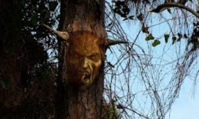 Proč získal Ďáblův strom tak děsivé jméno?