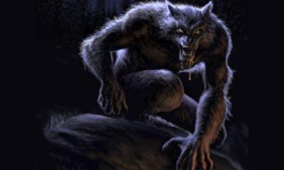 Existují vlkodlaci?