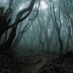 Zlověstný les Aokigihara: Proč sem tolik lidí přichází skoncovat se životem?