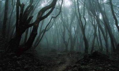 Zůstává ve stromech temná energie?