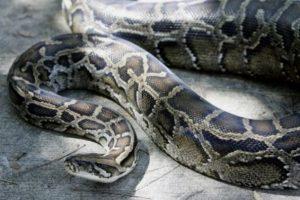 Podle domorodého vyprávění žije v hoře zlý šaman proměněný v obřího hada.