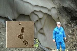 Zázračnou bakterii objevil ruský vědec Anatolij Brouchkov ve zmrzlé půdě na Sibiři.
