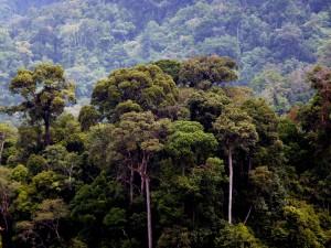 Sumatra v Indonésii je prý jedna z mála oblastí, kde se dosud mohou ukrývat neznámí tvorové.