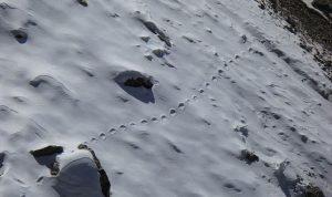 Patří sněžnému muži i stopy, které v lednu vyfotil cestovatel a záhadolog Steve Berry?
