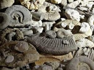 Proč se italský myslitel zajímal o fosilie?