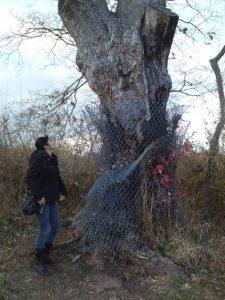 Neuvážené přiblížení se ke stromu může být údajně nebezpečné.