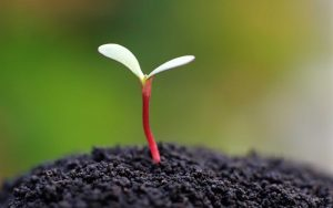 3. Aby rostlina dokázala vyrůst o jediný gram své hmotnosti, spotřebuje na to až půl litru vody.