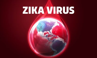 Světová zdravotnická organizace odhaduje, že v následujících několika letech se virem zika nakazí až 4 000 000 lidí.