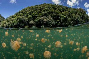 Jezero Ongeim'l Tketau s délkou 460 metrů je domovem obří kolonie medúz, žije jich tam odhadem na 30 milionů!