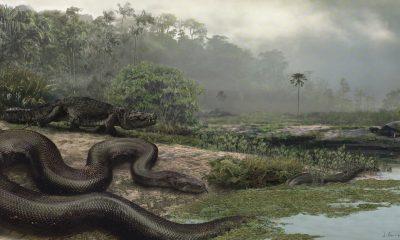 Podle objevů paleontologů je velmi pravděpodobné, že teplé pravěké podnebí přilákalo na naše území i tehdejší předky velkých krajt.