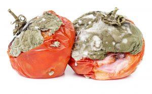 Viditelné skvrny jsou spory plísní či drobné částice, zbytek plísně, který můžeme přirovnat ke kořenům a větvičkám, není viditelný a skrývá se hluboko v zasažené potravině.
